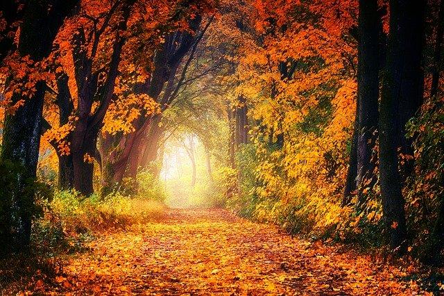 De herfstequinox: hoe vier je die het beste?